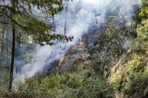 Wildfire Prevention in Klamath Falls, OR